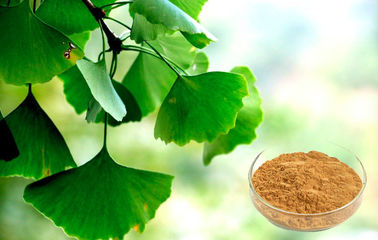 China Pharmaceutical Grade Ginkgo Biloba Extract For Health Care Products supplier