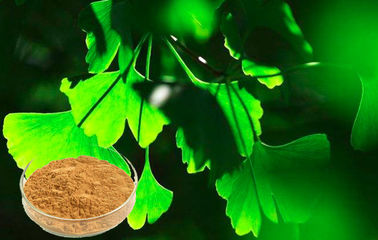 CHP2015 Ginkgo Biloba Leaf Extract For Auxiliary Hypolipidemic