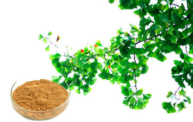 CONBA Ginkgo Biloba Extract For Improving Mental Performance