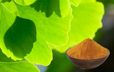 China Pure Ginkgo Biloba Extract Powder For Improving Mental Performance supplier