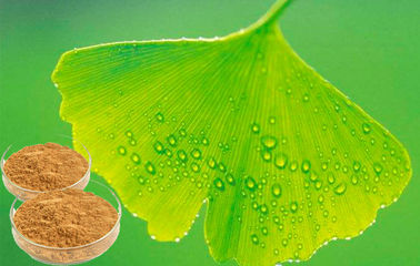 EP 9.0 Natural Botanical Ginkgo Extracts For Help improve memory