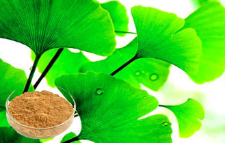 Pure Ginkgo Biloba Powder , Ginkgo Biloba Extract Bright yellow-brown, powder or friable mass