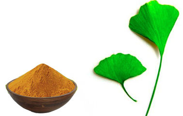 China Ginkgo Biloba 24 6 Extract  Leaf Extract Powder GMP, CEP, GEP(CCCMHPIE), Kosher, Halal, ISO9000, ISO14000 Certificated factory