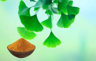 China Water Soluble Natural Ginkgo Biloba 24 6 Extract For Cosmetics factory