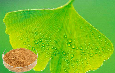 Light Brownish Yellow Ginkgo Biloba Leaf Extract 24% Flavone / 6%Lactone