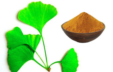 China Ginkgo Biloba Extract Powder With Advanced Extraction Technology CHP2015 factory