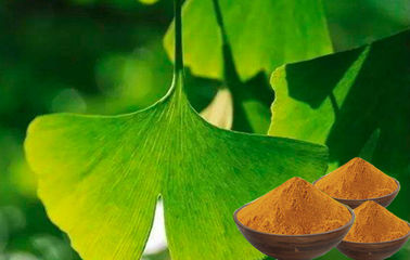 CONBA  Standardized Ginkgo Biloba For Memory Loss from GACP planting base