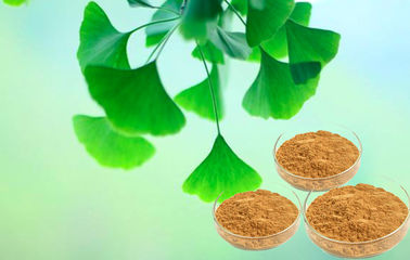 Pharmaceutical Grade Pure Ginkgo Extract For Auxiliary Hypolipidemic